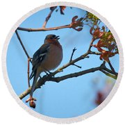 Chaffinch Round Beach Towel