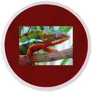Chameleon Close Up Round Beach Towel