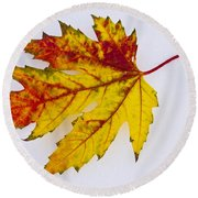 Changing Autumn Leaf In The Snow Round Beach Towel