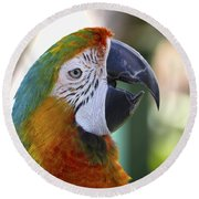 Chatty Macaw Round Beach Towel