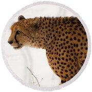 Cheetah Round Beach Towel