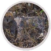 Cheetah Kitten Round Beach Towel