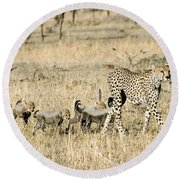 Cheetah Mother And Cubs Round Beach Towel