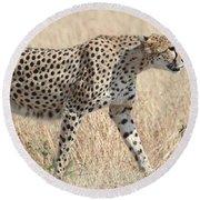 Cheetah Stepping Out Round Beach Towel
