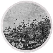 Cheetah Tip Toes For A Drink Round Beach Towel