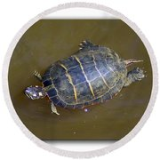 Chester River Turtle Round Beach Towel by Brian Wallace