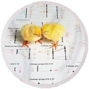 Chicken Genetics Round Beach Towel