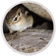 Chipmunk In Danger Round Beach Towel
