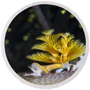 Christmas Tree Worm In Raja Ampat Round Beach Towel