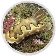 Chromodoris Coi Beige Nudibranch Round Beach Towel