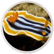 Chromodoris Magnifica Nudibranch Round Beach Towel
