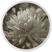 Chrysanthemum In Bloom Round Beach Towel