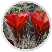 Claret Cup Duo Round Beach Towel
