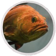 Close And Fishy Round Beach Towel