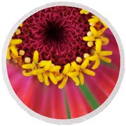 Close Up Dahlia Round Beach Towel