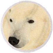 Close Up Of A Polar Bear, Churchill Round Beach Towel