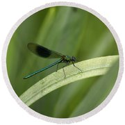 Close-up Of Dragonfly Perched On Leaf Round Beach Towel