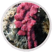 Close-up Of Live Sponge Round Beach Towel by Ted Kinsman