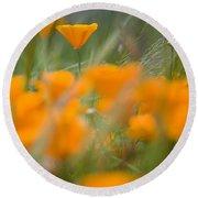 Close Up Of Orange Poppy Flowers Round Beach Towel