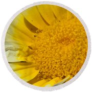 Close Up Of The Inside Of A Yellow And White Sun Flower Round Beach Towel