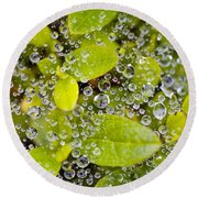 Closeup Of Morning Dew On Leaves Round Beach Towel