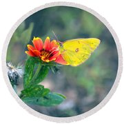Clouded Sulphur Butterfly Square Round Beach Towel