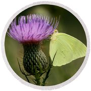 Cloudless Sulfur Butterfly On Bull Thistle Wildflower Round Beach Towel