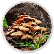 Cluster Fungus Round Beach Towel