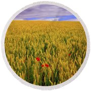 Co Waterford, Ireland Poppies In A Round Beach Towel