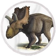 Coahuilaceratops Magnacuerna Round Beach Towel