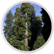 Coast Redwood Round Beach Towel