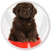 Cocker Spaniel Pup In Doggy Dish Round Beach Towel
