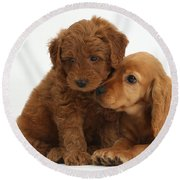 Cocker Spaniel Puppy And Goldendoodle Round Beach Towel