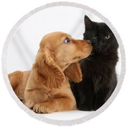 Cocker Spaniel Puppy And Maine Coon Round Beach Towel