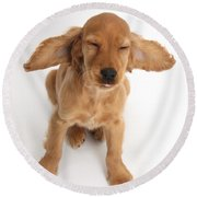 Cocker Spaniel Puppy Making A Face Round Beach Towel