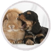Cockerpoo Pup And Lionhead-lop Rabbit Round Beach Towel
