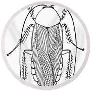 Cockroach Round Beach Towel