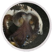 Coconut Octopus In Shell, North Round Beach Towel