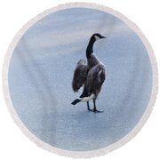 Cold Goose Dreams Round Beach Towel
