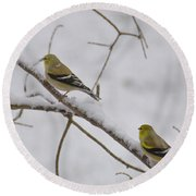 Cold Yellow Finch Walk Round Beach Towel