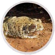 Colorado River Toad Round Beach Towel