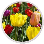 Colorful Bright Tulip Flowers Field Tulips Floral Art Prints Round Beach Towel