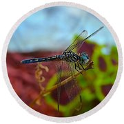 Colorful Dragon Fly Round Beach Towel