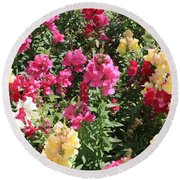 Colorful Snapdragons In San Antonio Round Beach Towel