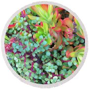 Colorful Succulent Plants For You Round Beach Towel