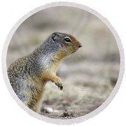 Columbian Ground Squirrel, Banff Round Beach Towel