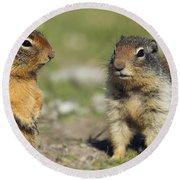 Columbian Ground Squirrels, Banff Round Beach Towel