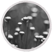 Coming Up Daisies Abstract In Black And White Round Beach Towel