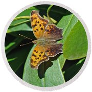 Comma Anglewing Butterfly - Polygonia C-album Round Beach Towel
