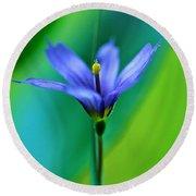Common Blue Eyed Grass Sisyrinchium Round Beach Towel